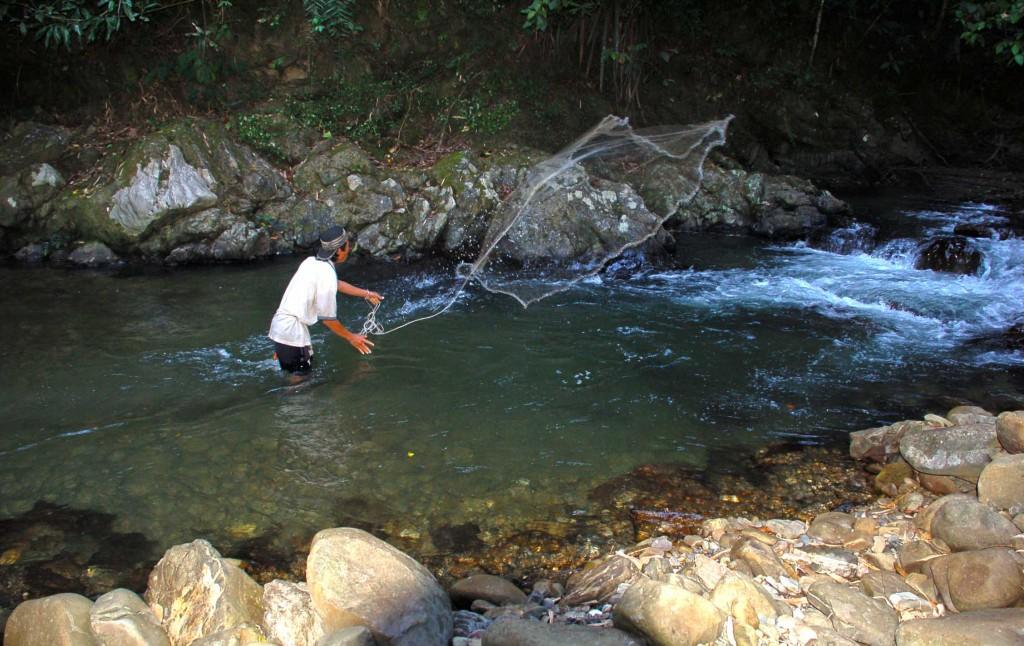 Aktiviti merambat ikan di sungai