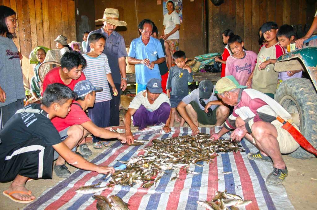Mengumpul hasil tangkapan ikan di sungai Molout, Kg Tampasak Liwan