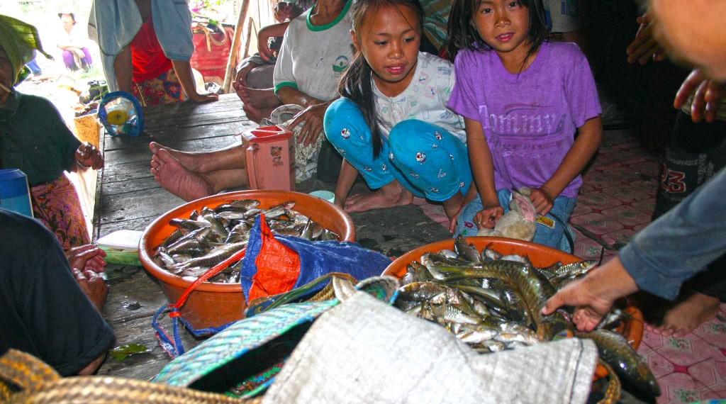 Sebahagian ikan yang ditangkap dikumpul sebelum dibahagikan kepada penduduk Kg. Tampasak Liwan